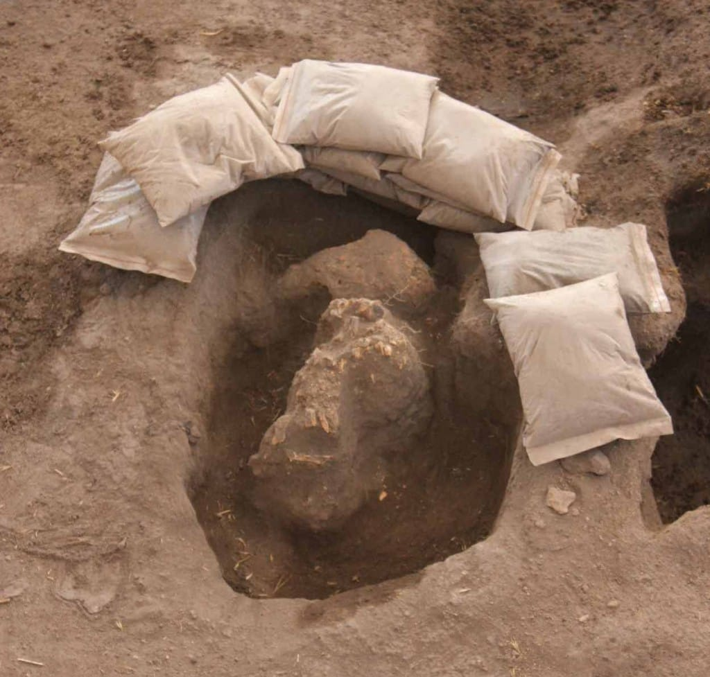 Partial skull under excavation in M