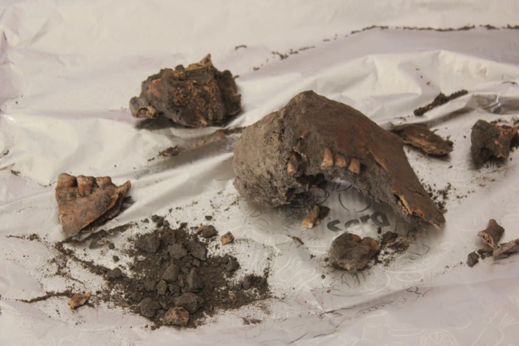 Fragments of a skull from BK