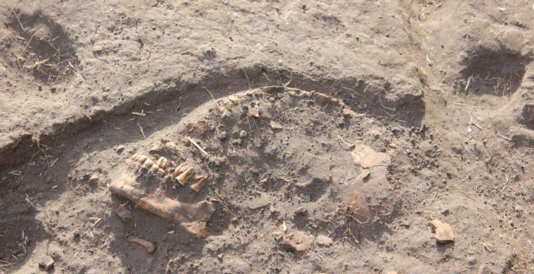 Skull in J